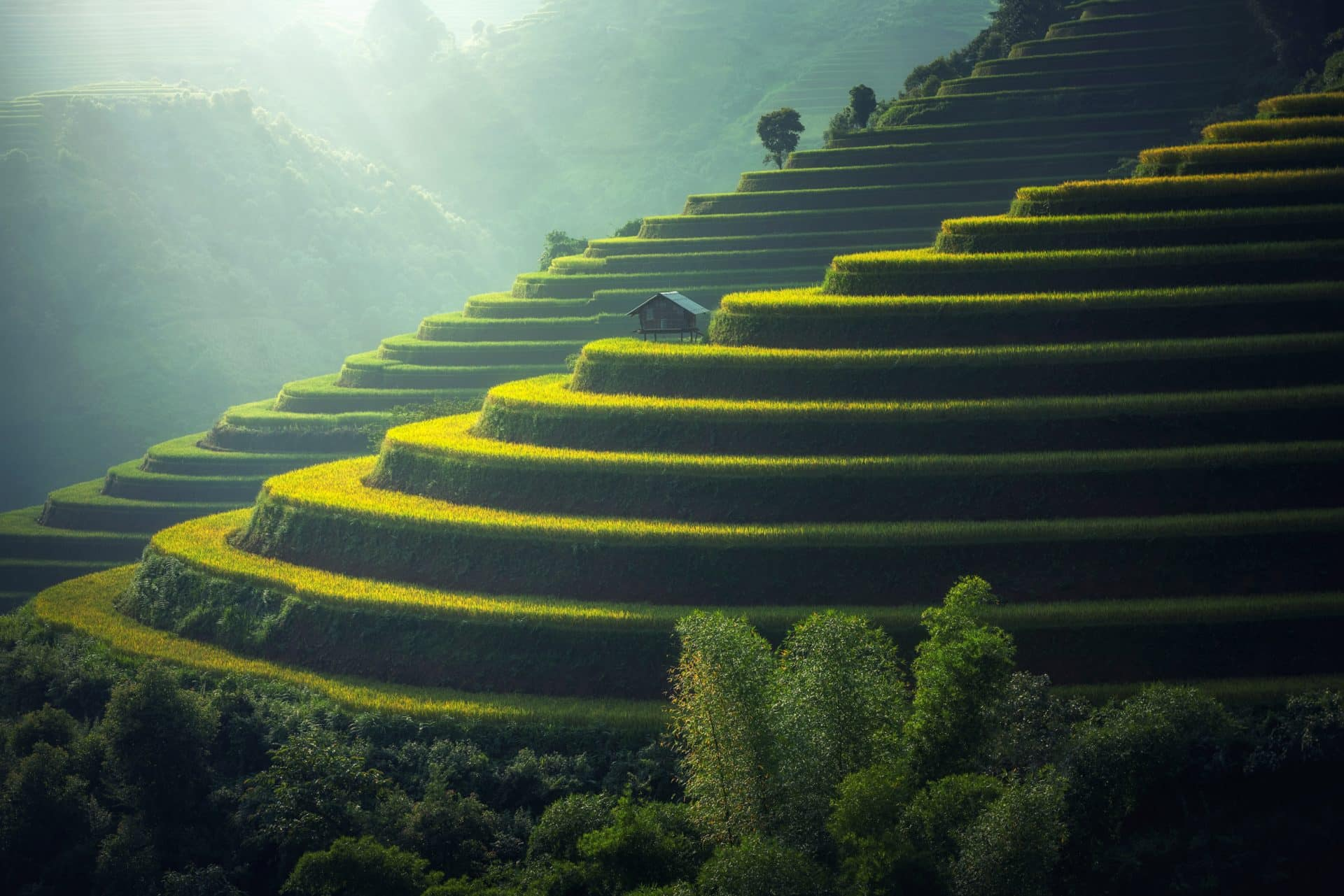 Image of terraced rice farms to represent Linux distributions for IoT stacks