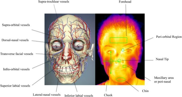 Changes in blood flow underneath the skin lead to changes in temperature, picked up by thermal vision cameras. That data could have IoT applications for smart museum visitors.