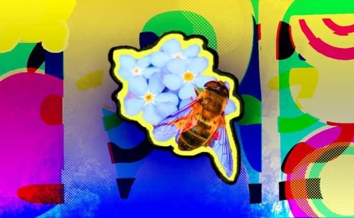 Image of a honeybee collecting pollen