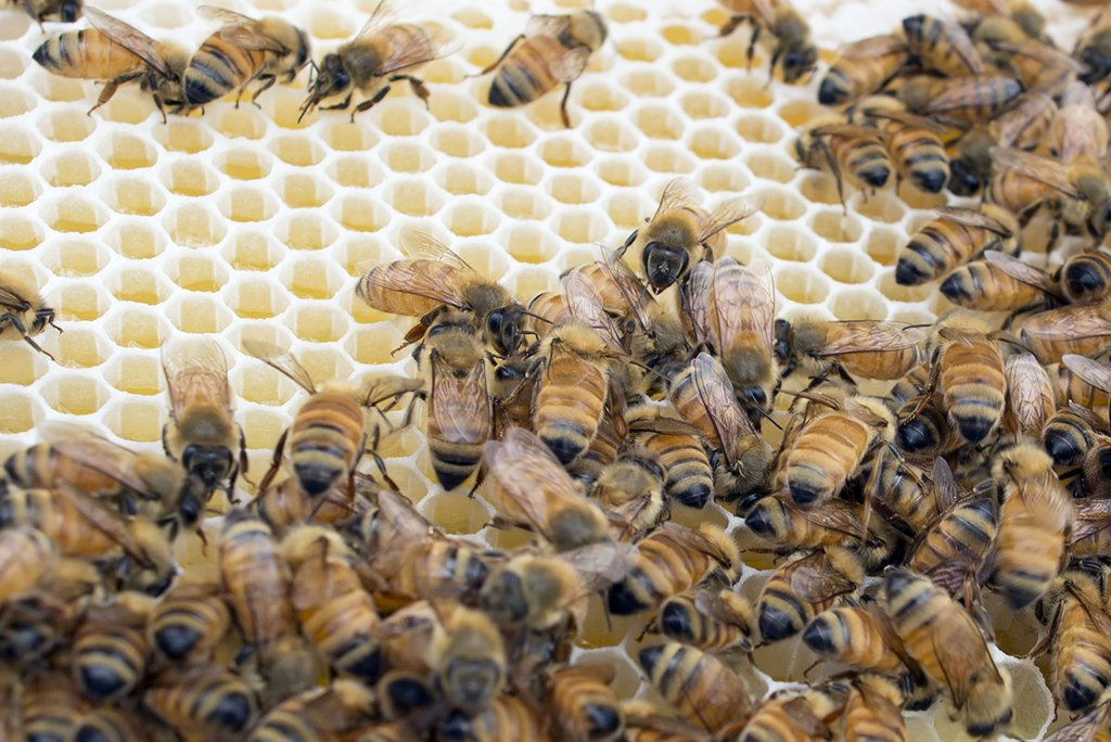 An image of a bee colony hive and a honeycomb.