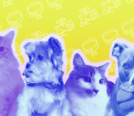 Image of two cats and two dogs