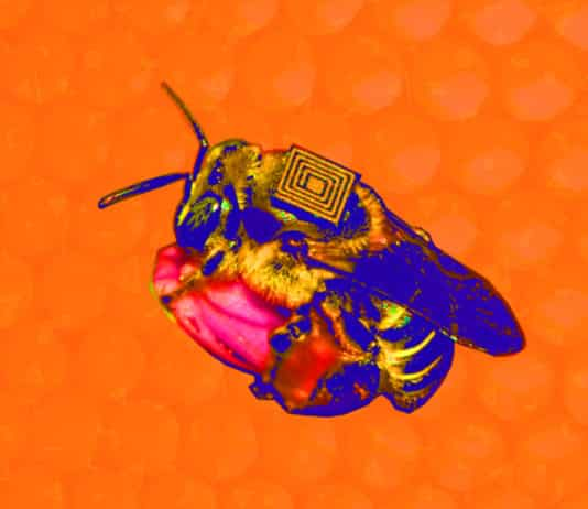 How-IoT-Can-Save-the-Bees