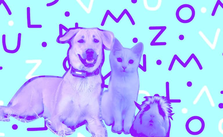 IoT-Applications-for-Pets
