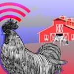 Image of a chicken with the wifi symbol over it in front of a barn