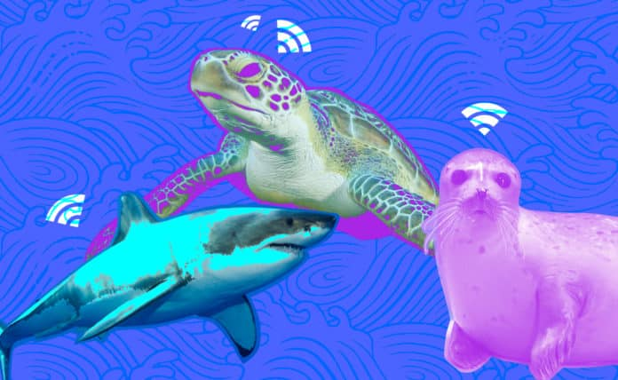 IoT-Applications-in-Aquatic-Animal-Tracking