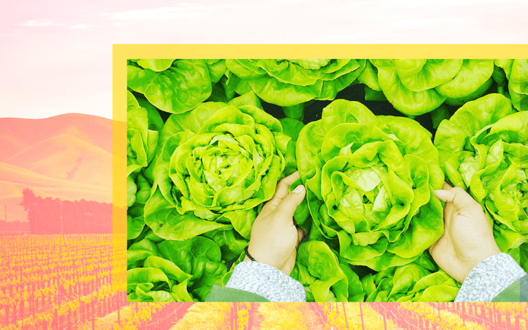 An image of two hands holding lettuce on a backdrop of a farm