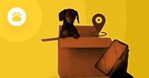dog in a box with a tracking system app