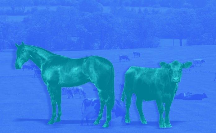 Farming, IoT, analytics
